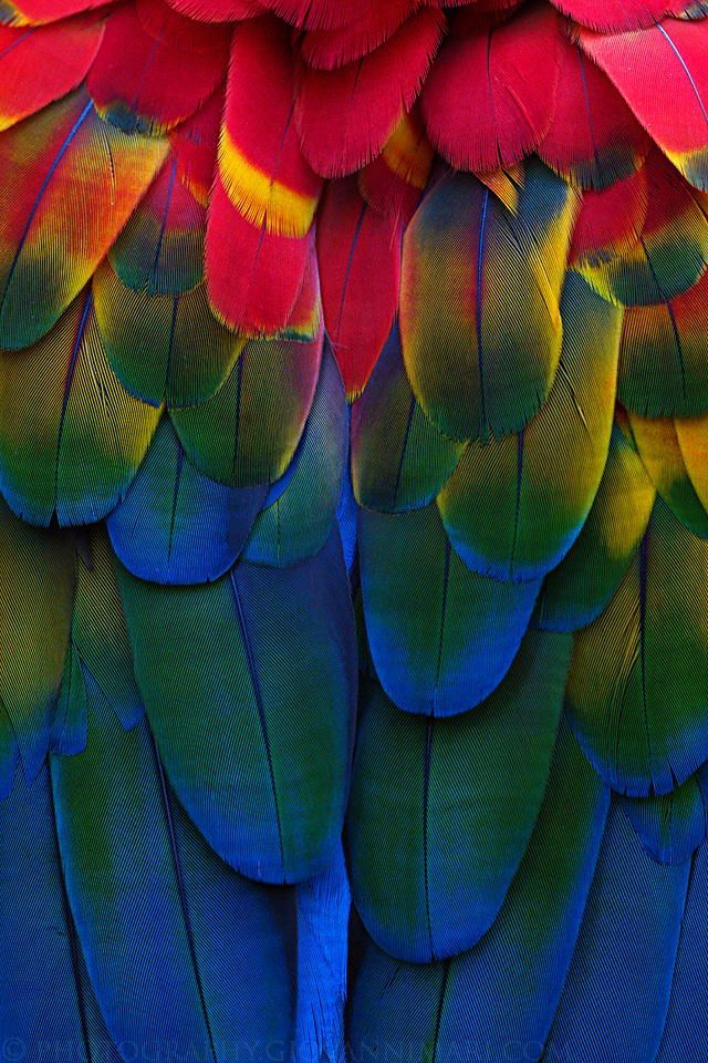 What a nice color combo! Feathers http//www.keypcreative