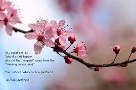 Cherry Blossom Quotes Google Search Bunga Sakura Seni Bunga Bunga