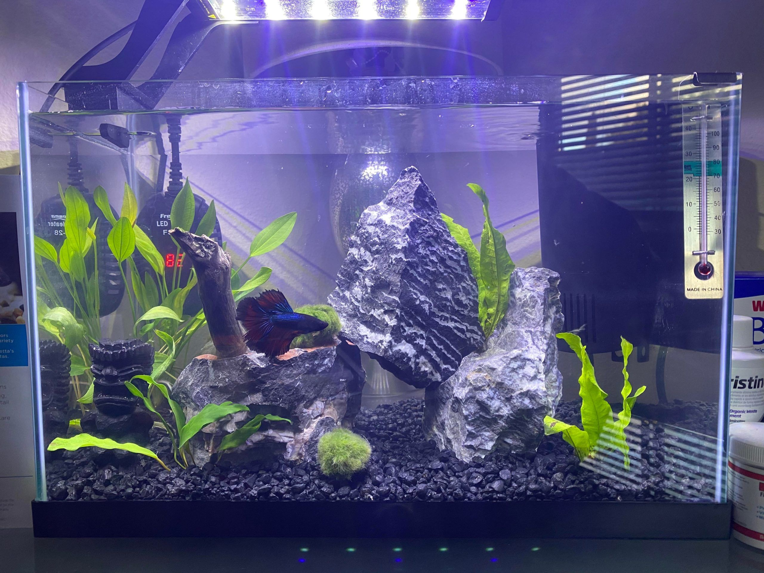 Betta Fish Please Critique And Rate My Betta Fish Tank Updated