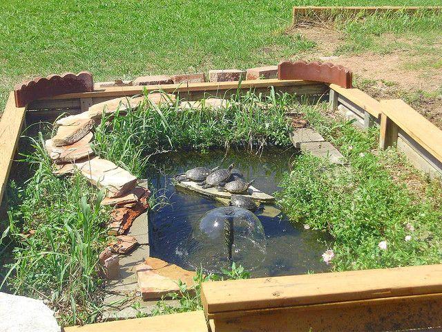 TURTLE POND Round Rock Texas   Diy pond, Turtle pond ...