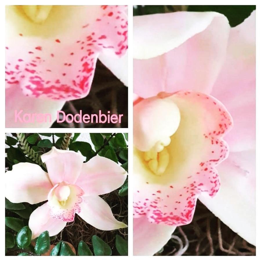 Cymbidium Sugar Orchid By Karen Dodenbier Sugar Flowers Gum Paste Flowers Orchids