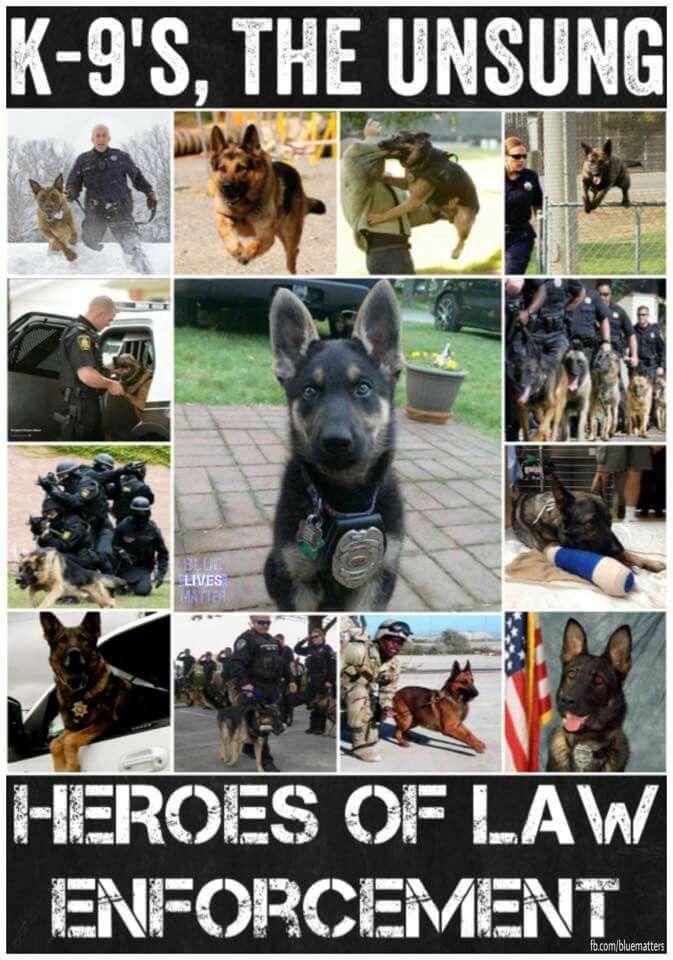 K-9u0027s, the unsung heroes of law enforcement - k9 officer sample resume