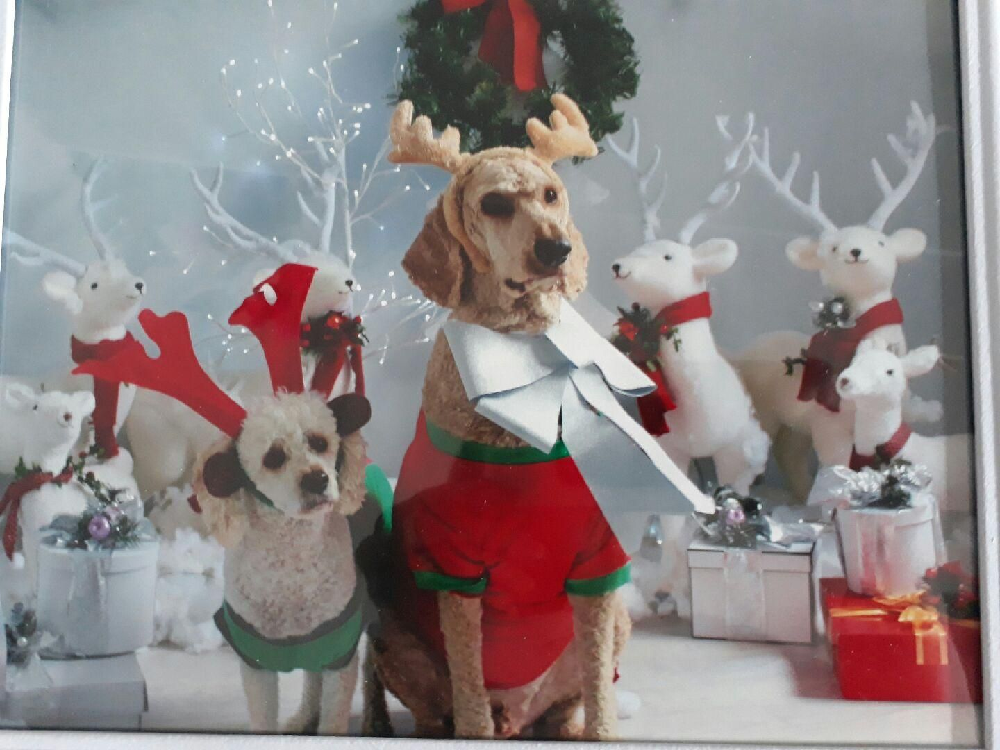 ziggy and jakes christmas photo http ift tt 2nwkord cute puppies