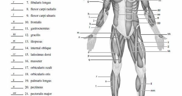 Blank Muscle Diagram to Label Unique Blank Muscle Diagram ...