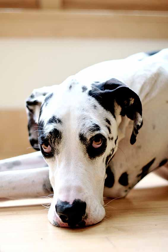 Big Dog Names Perfect For A Large Breed Female Or Male Big Dog