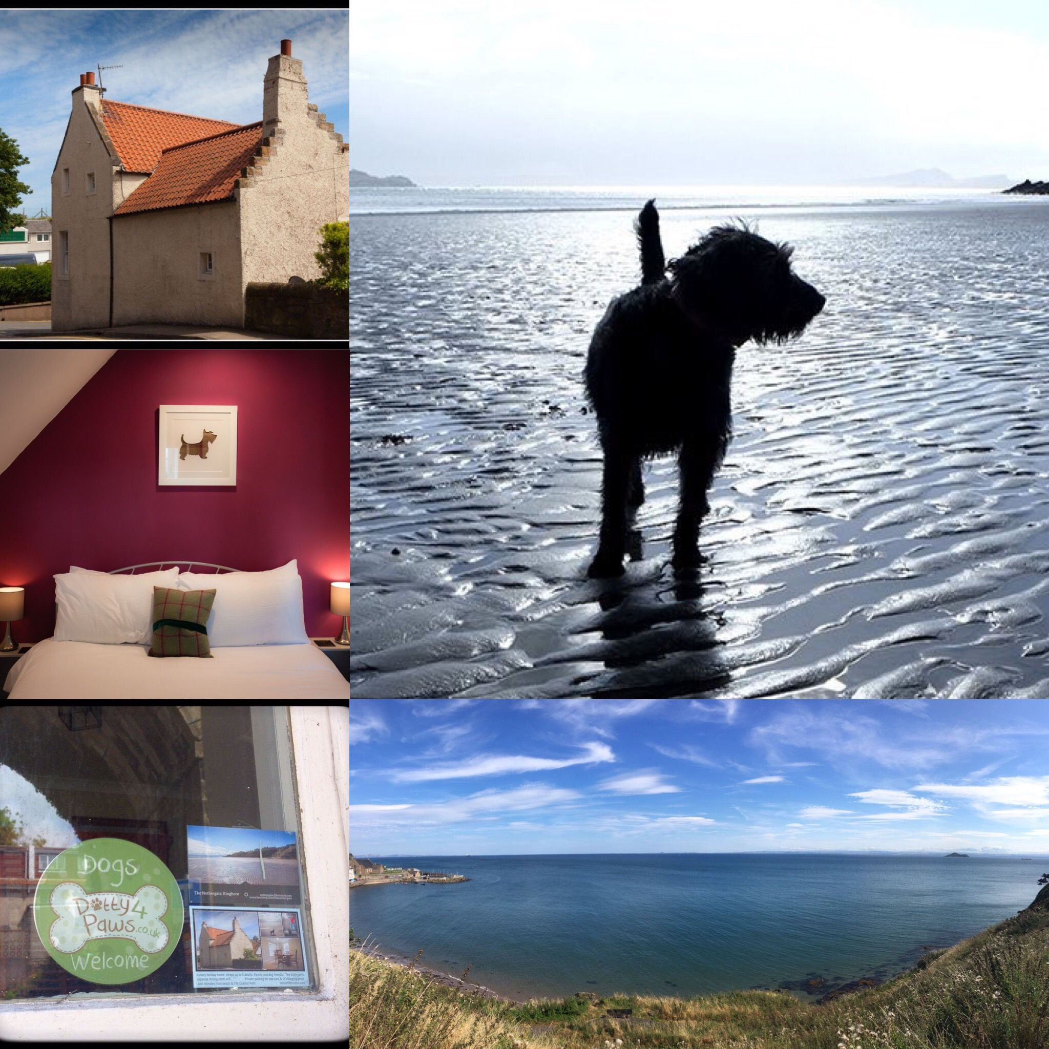 Dog Friendly The Nethergate Cottage Kinghorn, Fife Dog