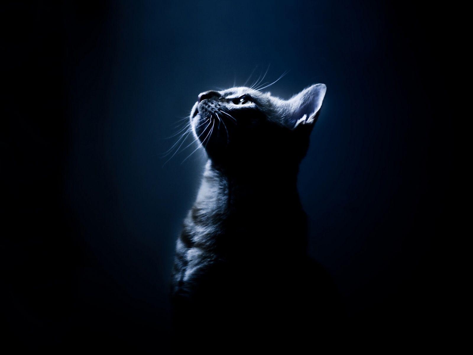 Epingle Par Sylvie Sh Sur Cats Beaux Chats Animaux Les Plus Mignons Animales