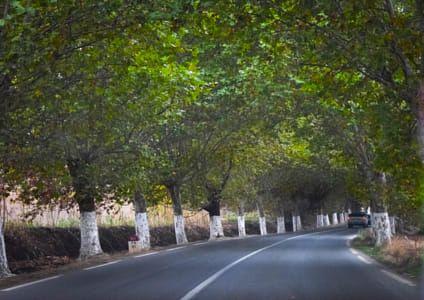 Algeria -Tipaza - road - trees
