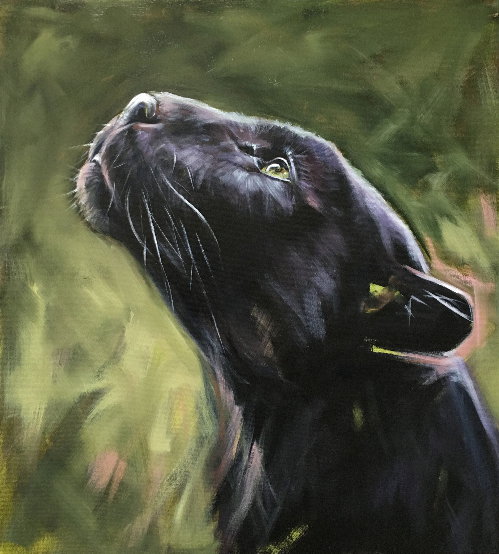 Black Panther Painting By American Wildlife Artist Aimee Rolin