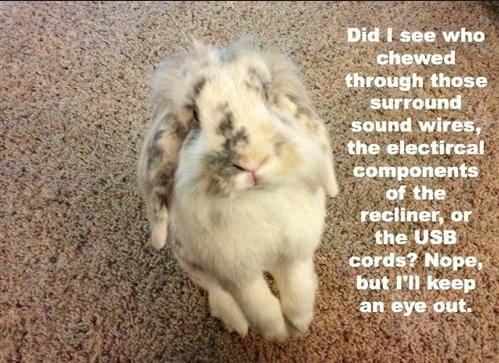 Oooh Naughty Little #Bunny!!! #BunnyBox