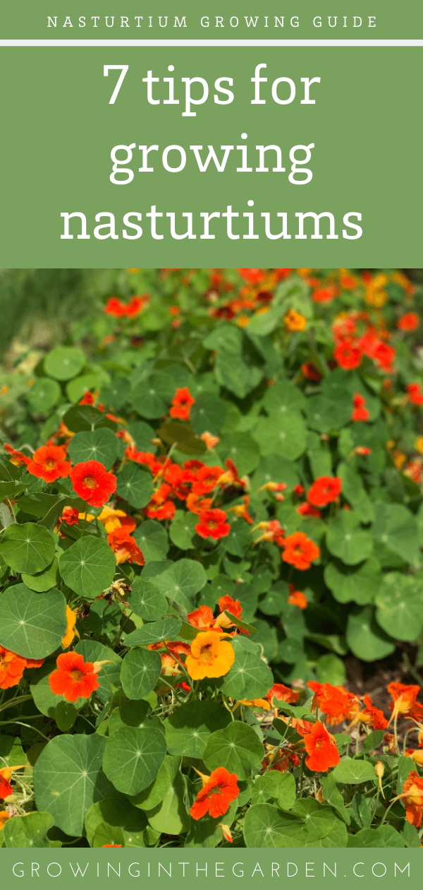 Examine This Report about When To Harvest Nasturtium Seeds