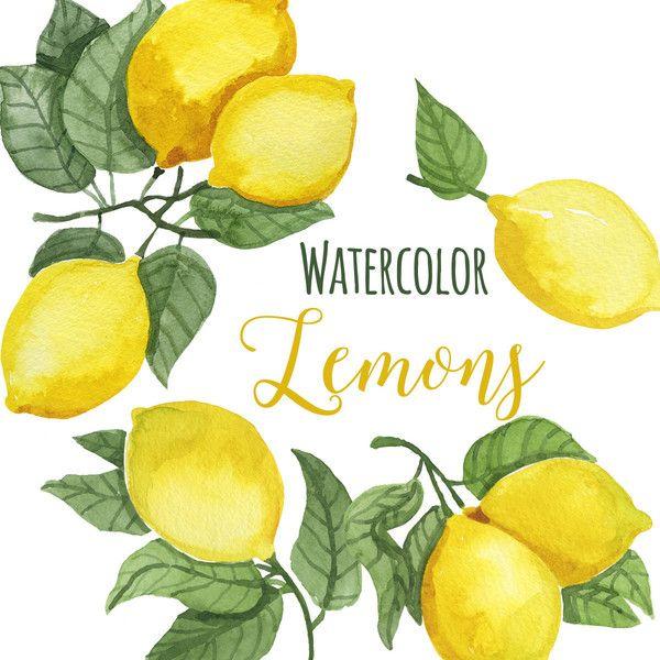 Watercolor Lemon Clip Art, Trendy Lemon leaves Clipart, Lemons ...