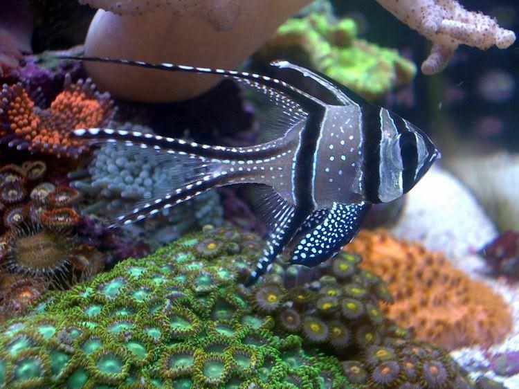 Small Saltwater Aquarium Fish Google Search Saltwater Aquarium Saltwater Fish Tanks Salt Water Fish