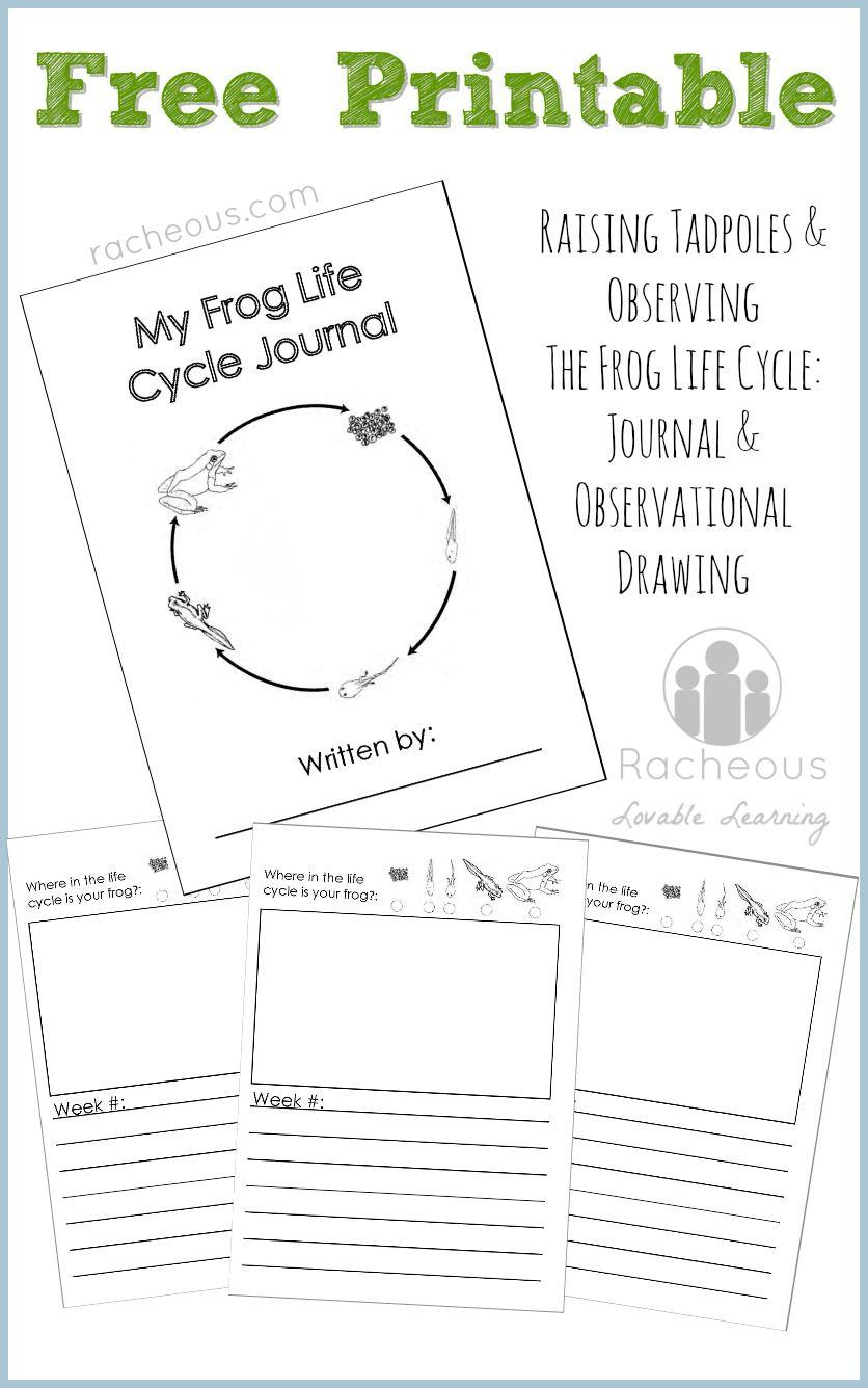 Free Printable Frog Life Cycle Journal Lifecycle Of A Frog Life Cycles Frog Life