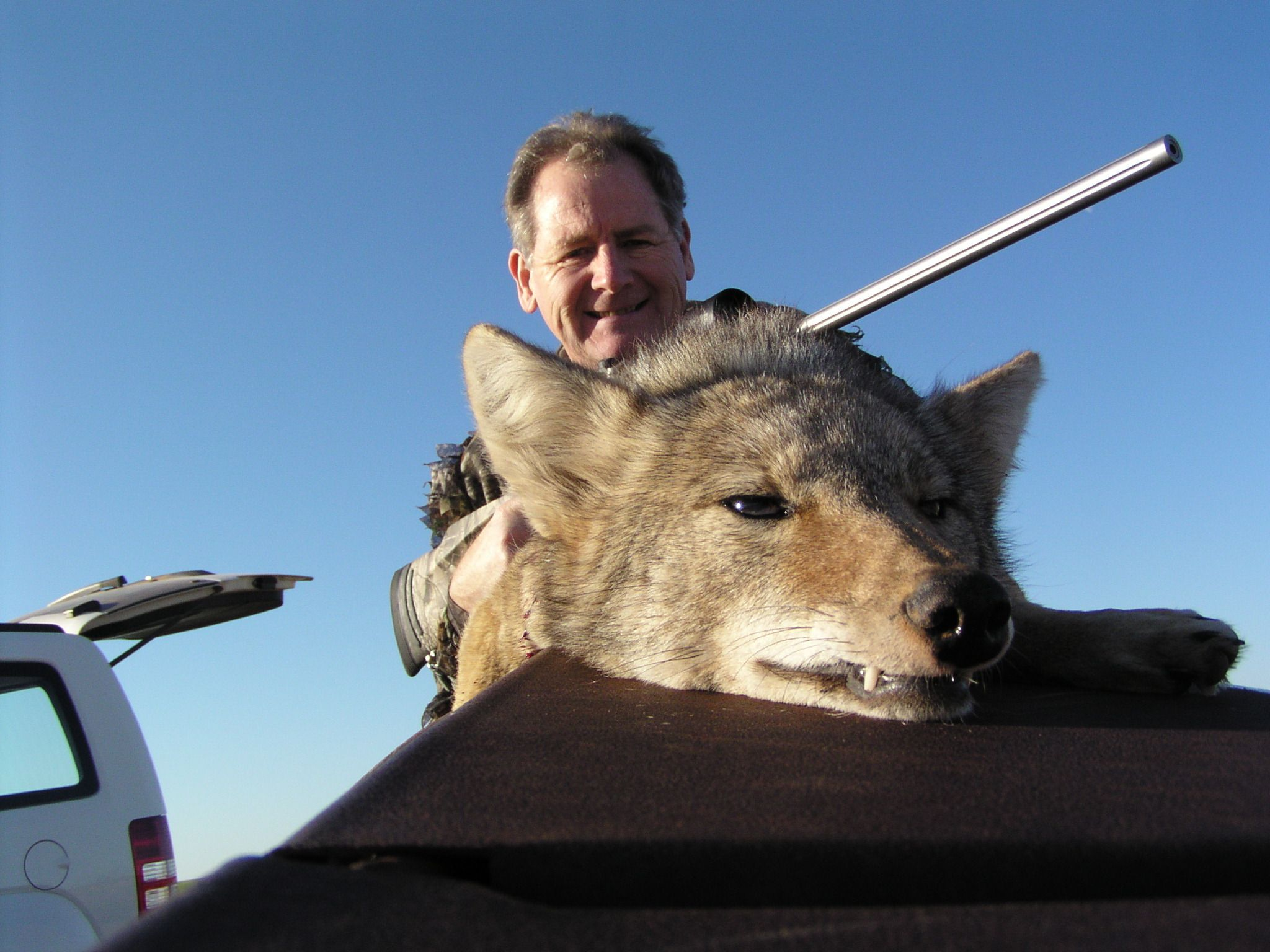 Coyote hunting varmint hunting