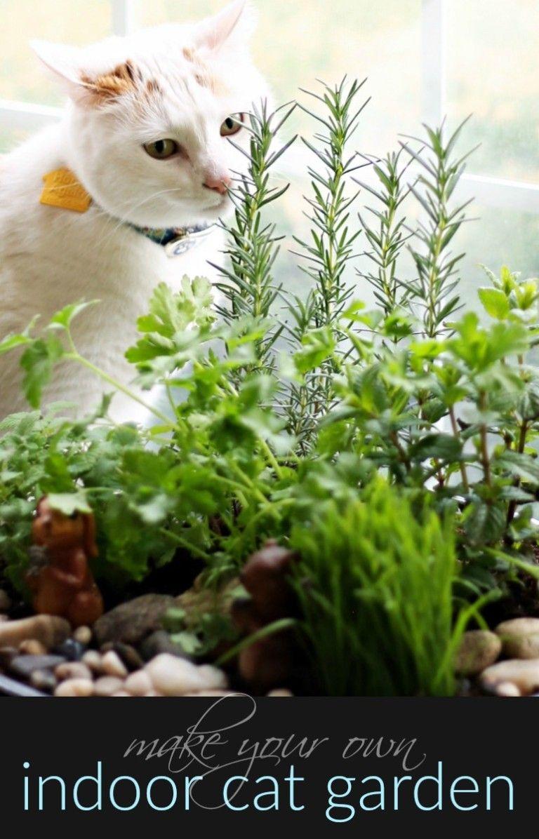 How To Make An Amazing Diy Indoor Cat Garden In 2020 Cat Garden Indoor Cat Garden Indoor Cat