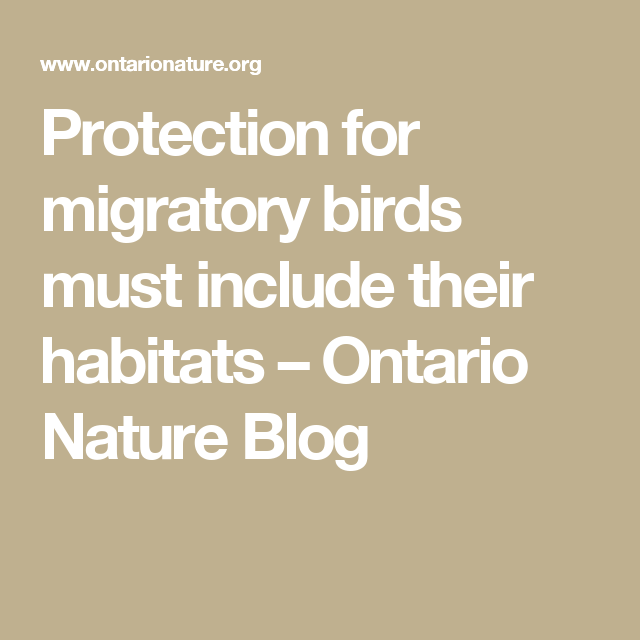 Protection for migratory birds must include their habitats – Ontario Nature Blog