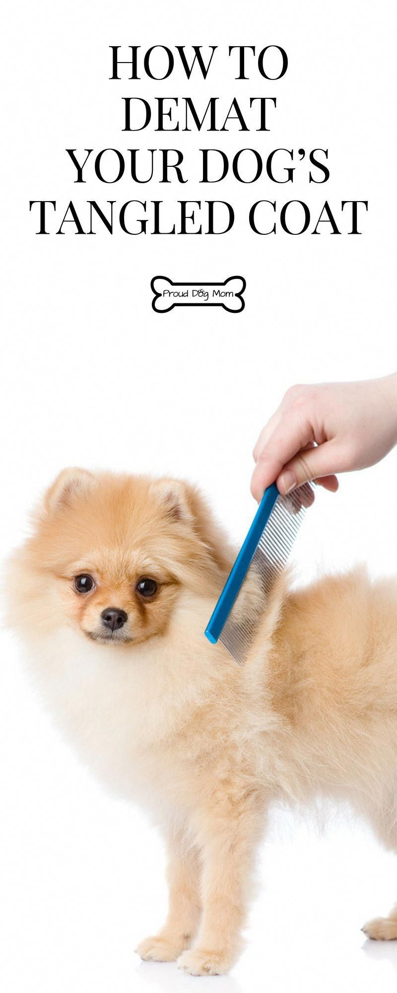 Home Grooming Tips How To Demat Your Dog's Tangled Coat