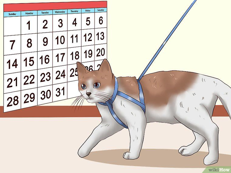 How To Leash Train A Cat 9 Steps With Pictures Cat Training Tricks Pretty Cats Cat Cuddle