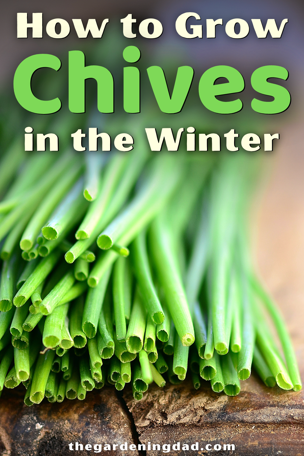 10 Proven Tips How To Grow Chives The Gardening Dad Growing Chives Growing Organic Vegetables Organic Gardening Tips