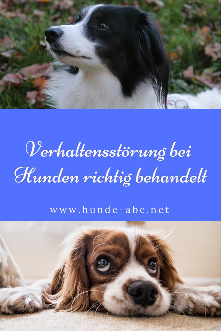 Verhaltensstorungen Bei Hunden Richtig Behandelt Online Ratgeber