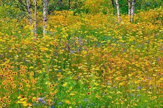 Prairie Tuinen
