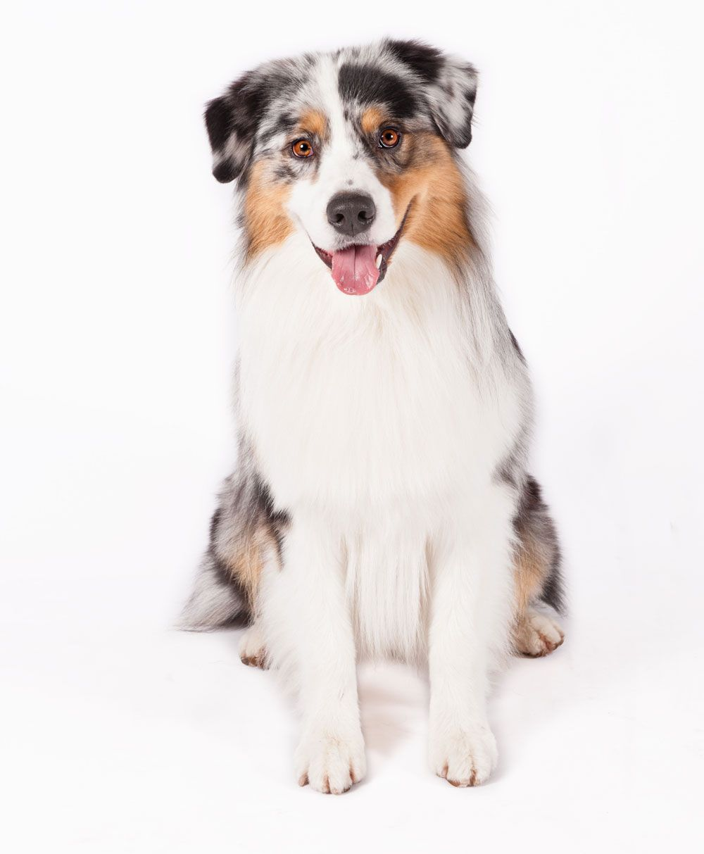 The Best Types of Dogs for Runners   Best dog breeds ...