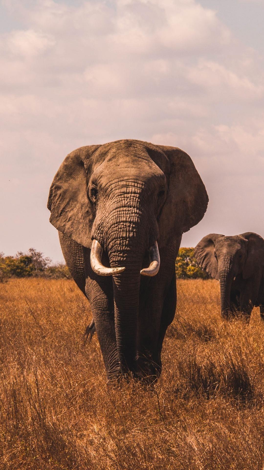 Photo of Elefant Wallpapaer Hintergrundbild