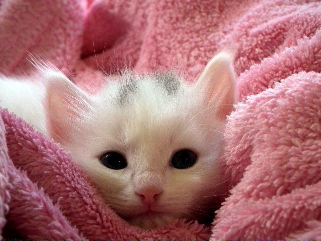 Cats In The Cradle Song CatsStandingUp id451985157