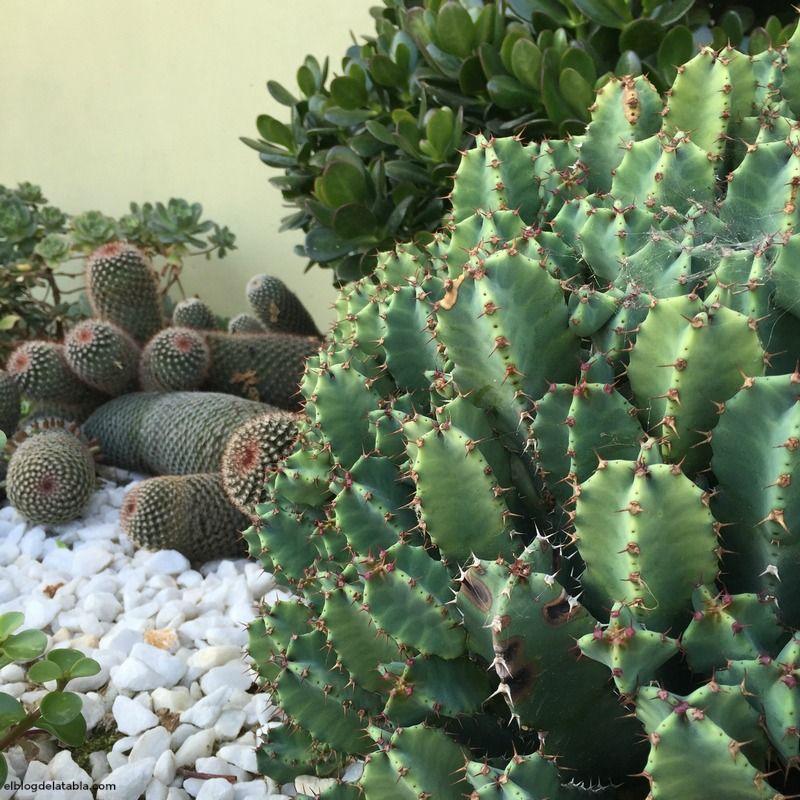 Callejones con salida y plantas suculentas | El Blog de La Tabla