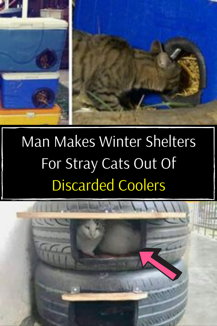 Man Makes Winter Shelters For Stray Cats Out Of Discarded Coolers The Shelter Pet Project Good News New Year 2020