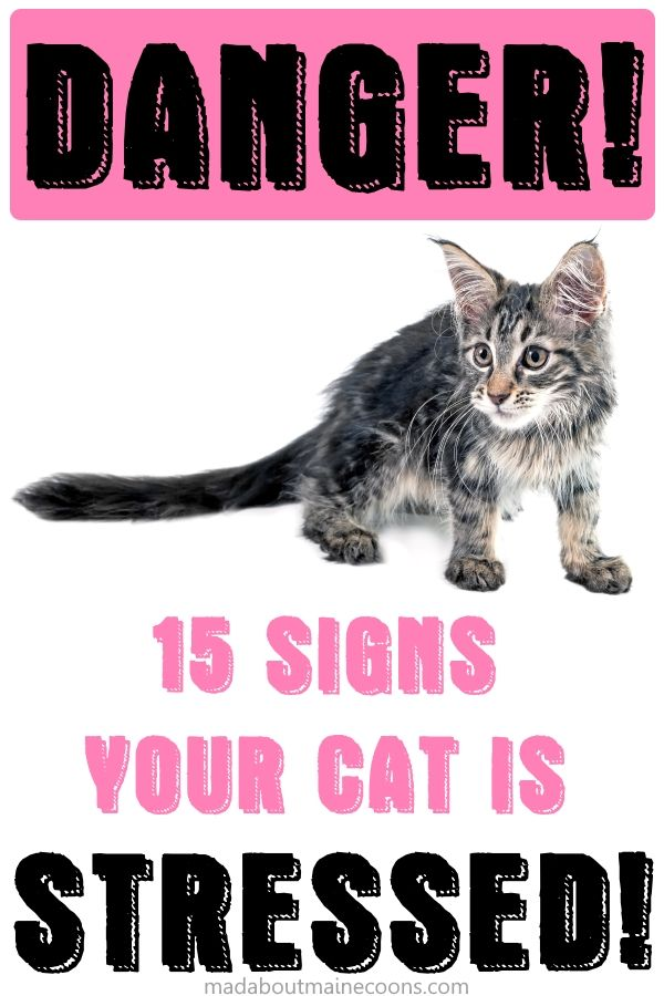 15 Signs That Your Cat Might Be Stressed | Cats, Cat ...