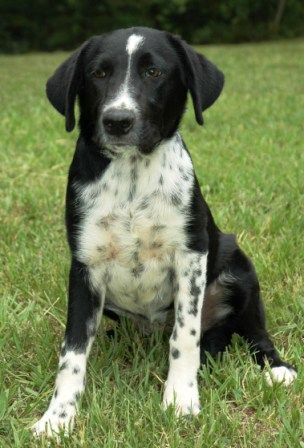 Border Collie Mix Border Collie Dalmation Mix Group Picture Image By Tag Cute Animals Cute Dogs Border Collie