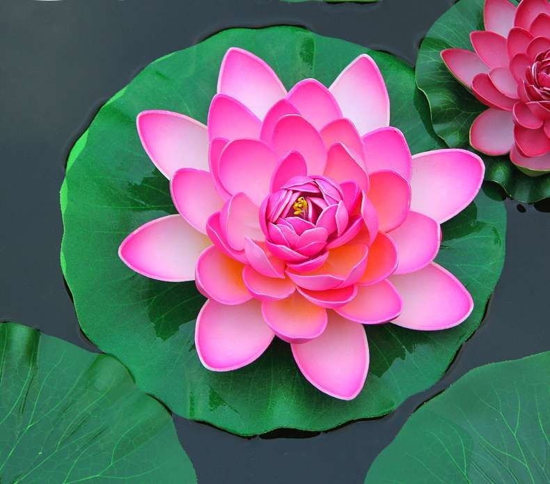 Click To Buy Lotus Flower With Lotus Leaf Floating Water Lily For