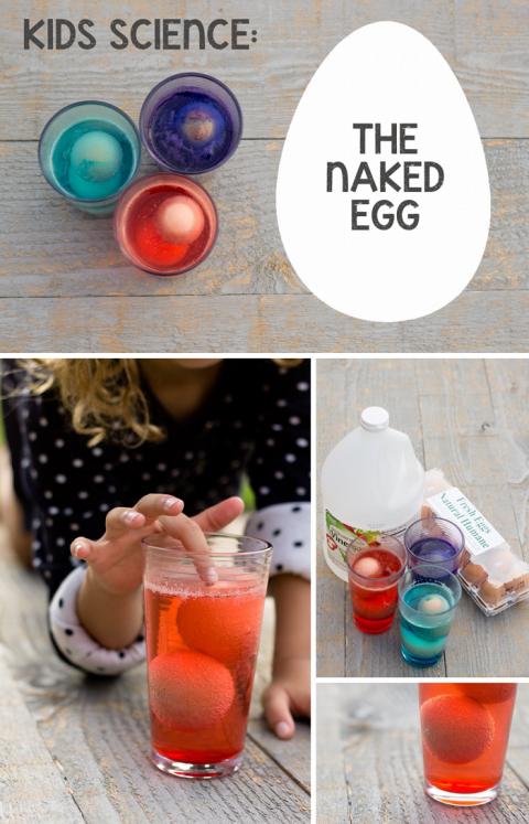 Naked Egg Experiment - YouTube
