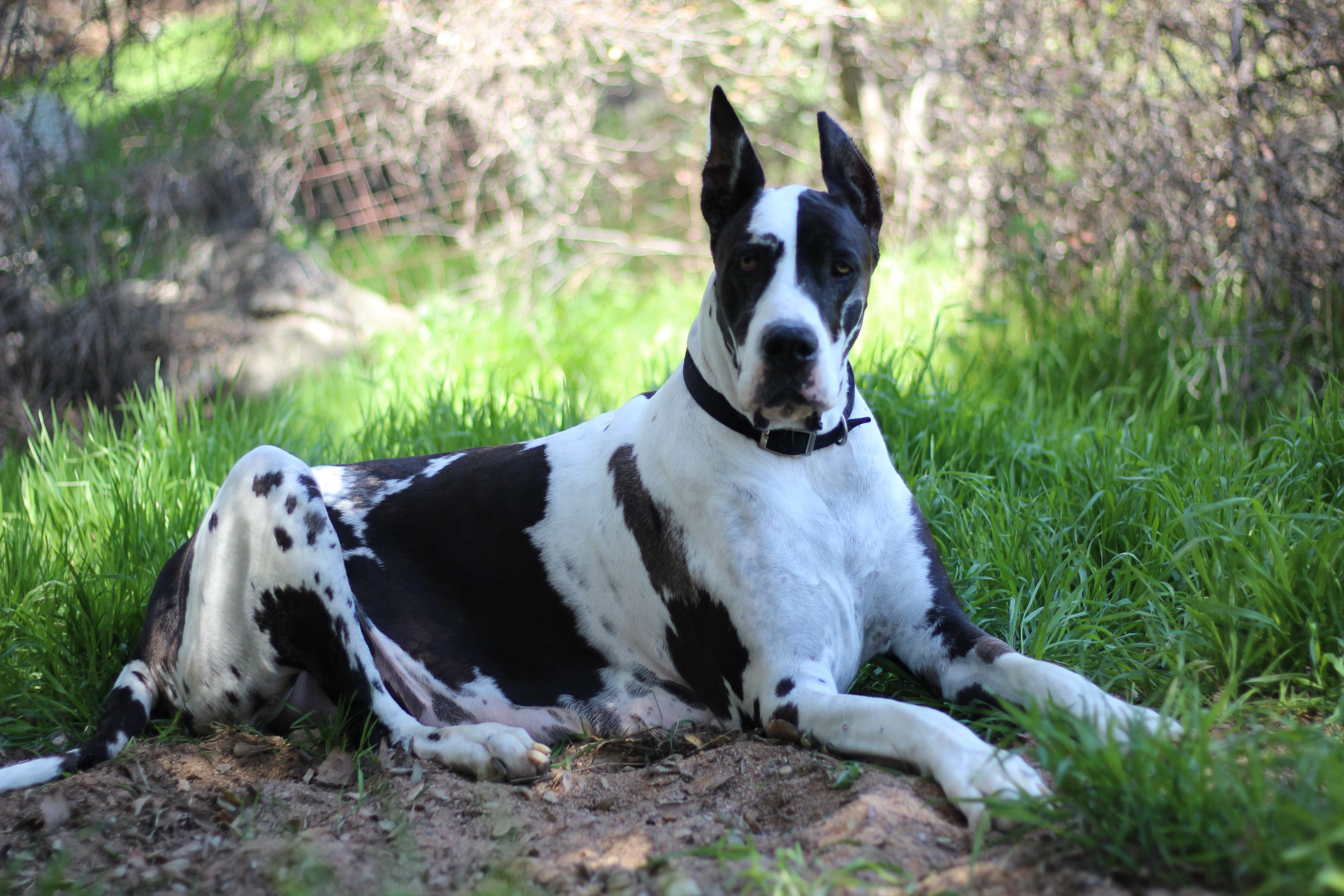 We Were Blessed With The Best Dogs In The World The Great Danes