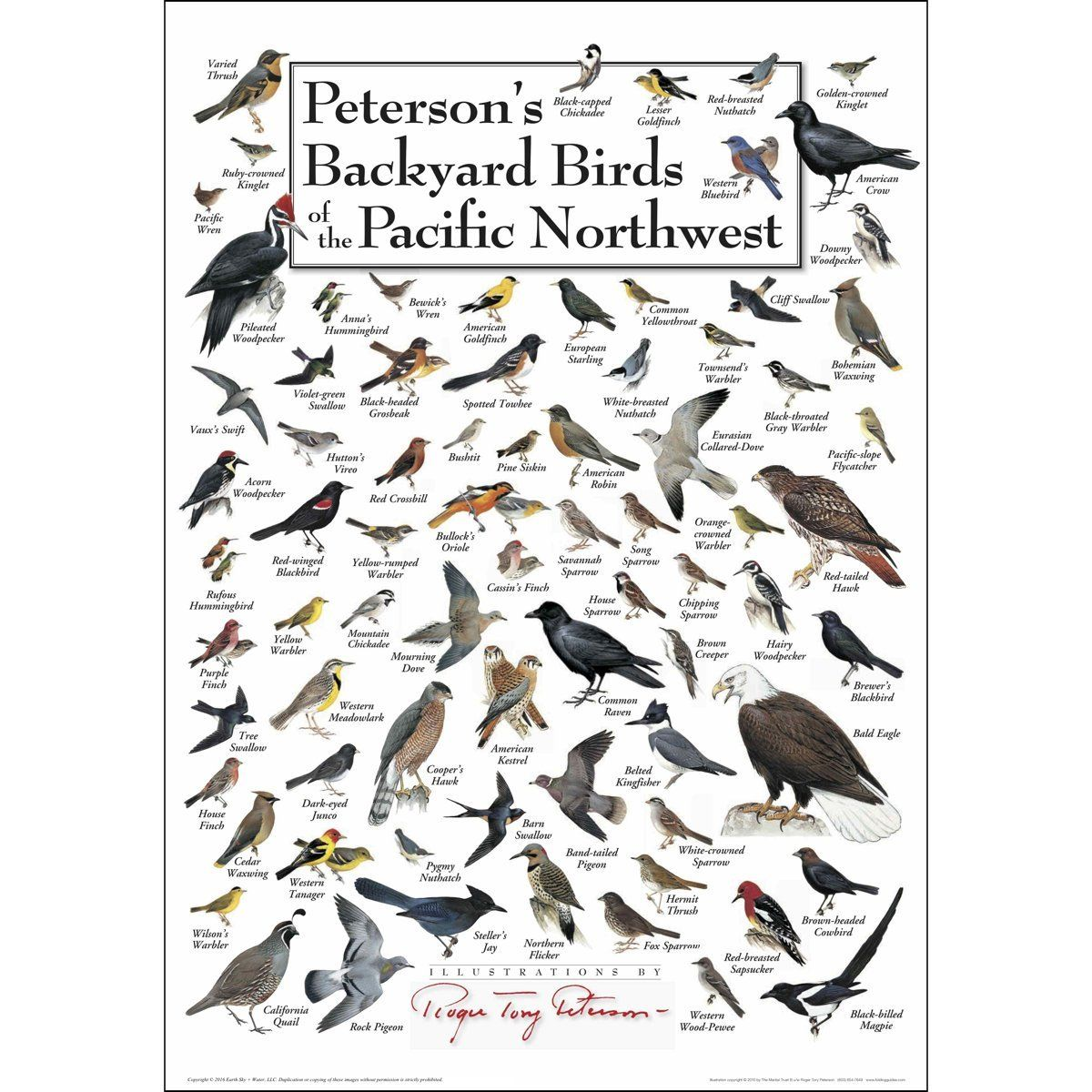 Image result for birds of oregon field guide | Backyard ...