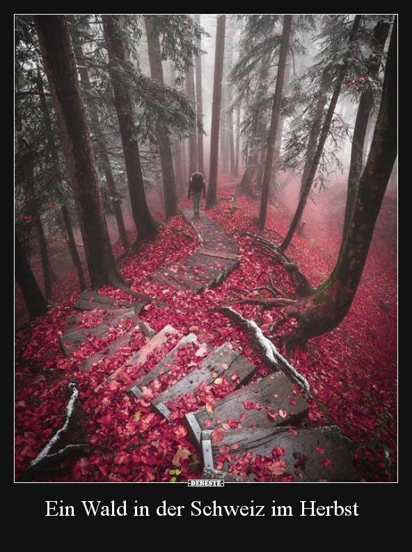 Ein Wald in der Schweiz im Herbst.. | Lustige Bilder, Sprüche, Witze, echt lustig #landscapepics