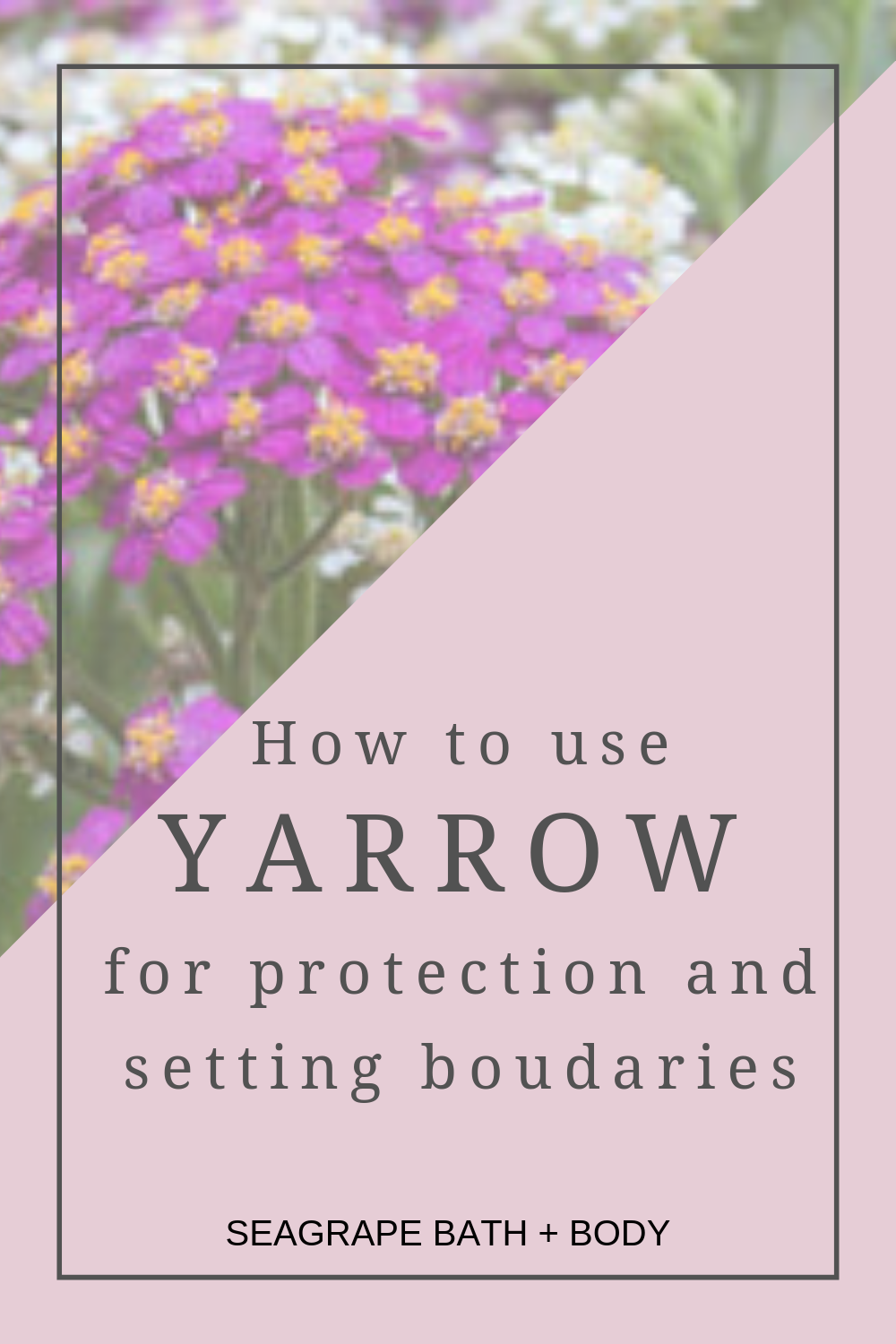 Yarrow A Plant That Grows Anywhere Has Many Wonderful Uses And Benefits Including For Protection And Boundary Herbal Tinctures Yarrow Flower Essences Remedies