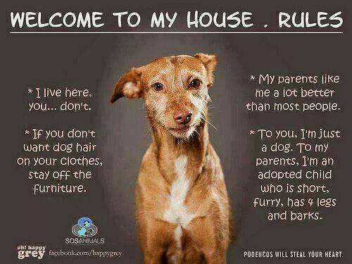 Rules At My House Dog Rules Dogs Welcome To My House