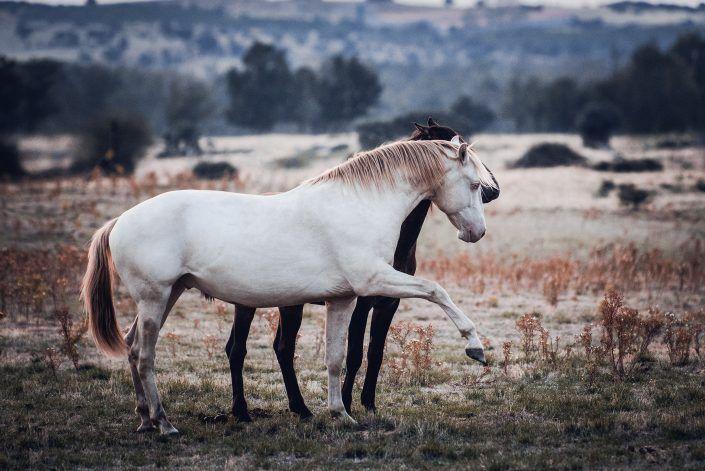 Fotos Pferde In Der Natur I Anna Ibelshauser Schone Pferde Pferde Pferde Hintergrund