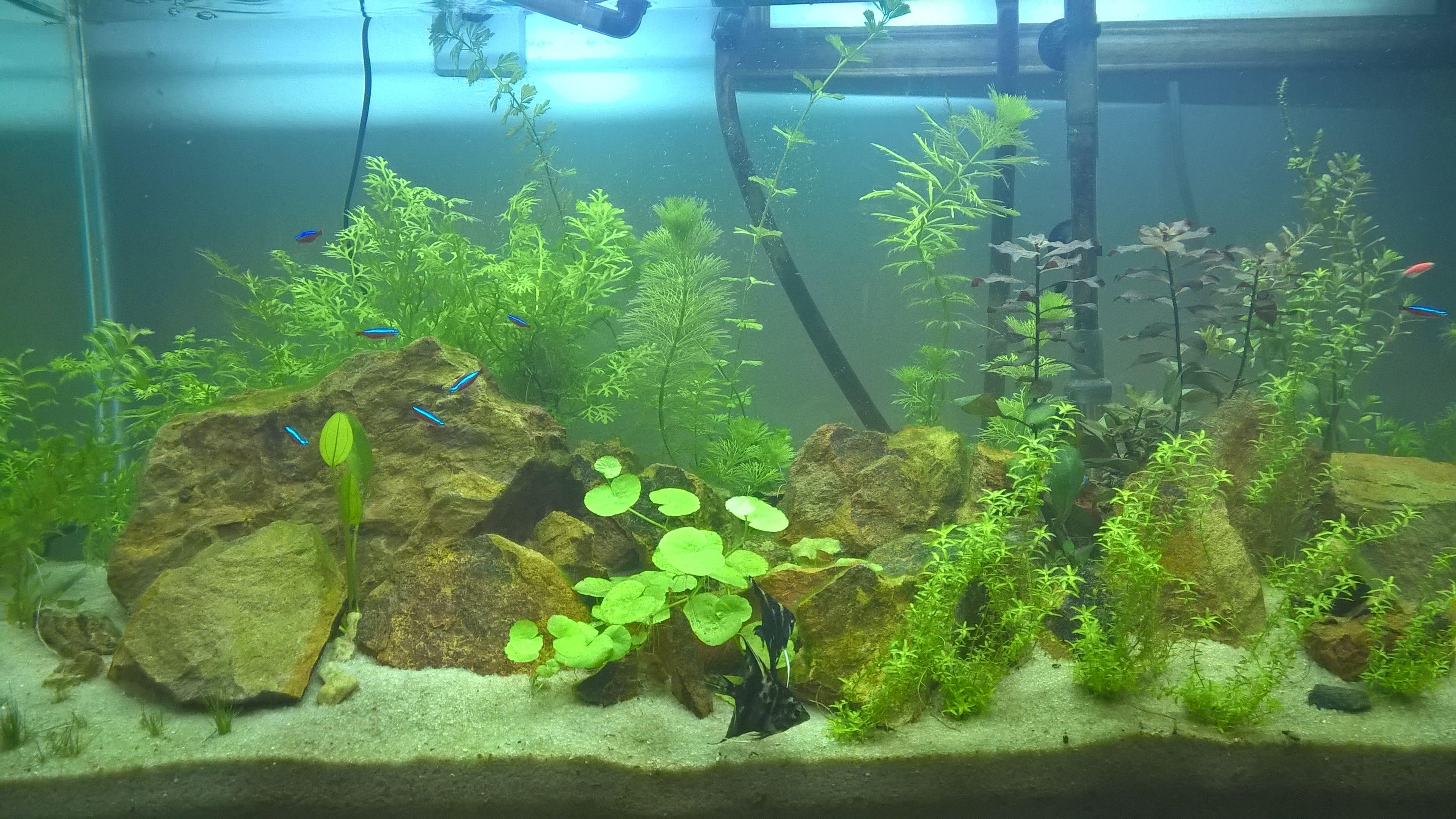 Meu aquário plantado cada dia mais bonito aquascape pinterest