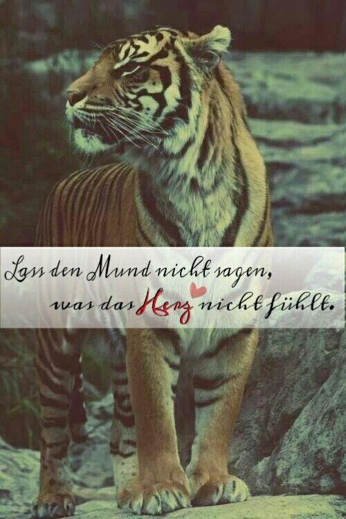 Sprüche Tiger Herz Gefühle Liebe Sprüche Weisheiten