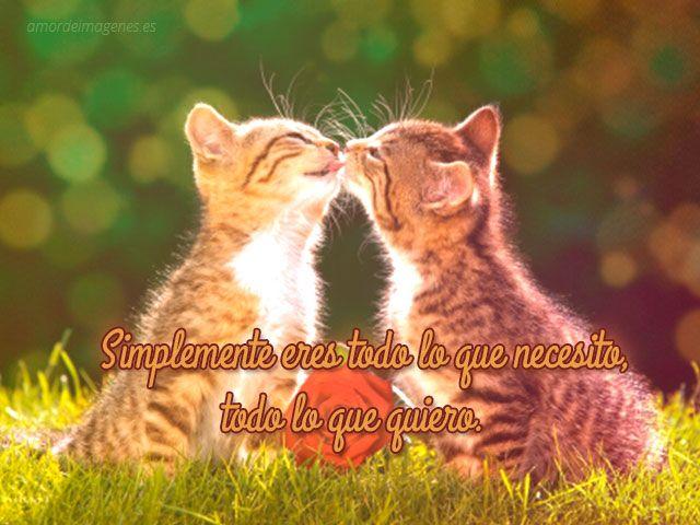 Imágenes De Para Descargar Amor Frases Gratis Gatos Con ARj453L