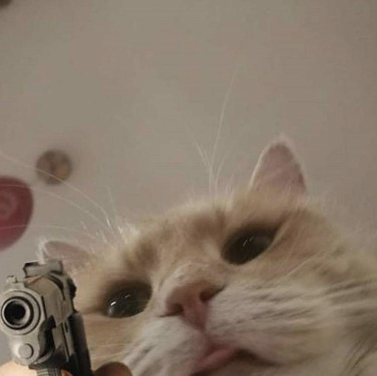 152 Mejores Imagenes De Gatos Random En 2020 Meme Gato Gatos