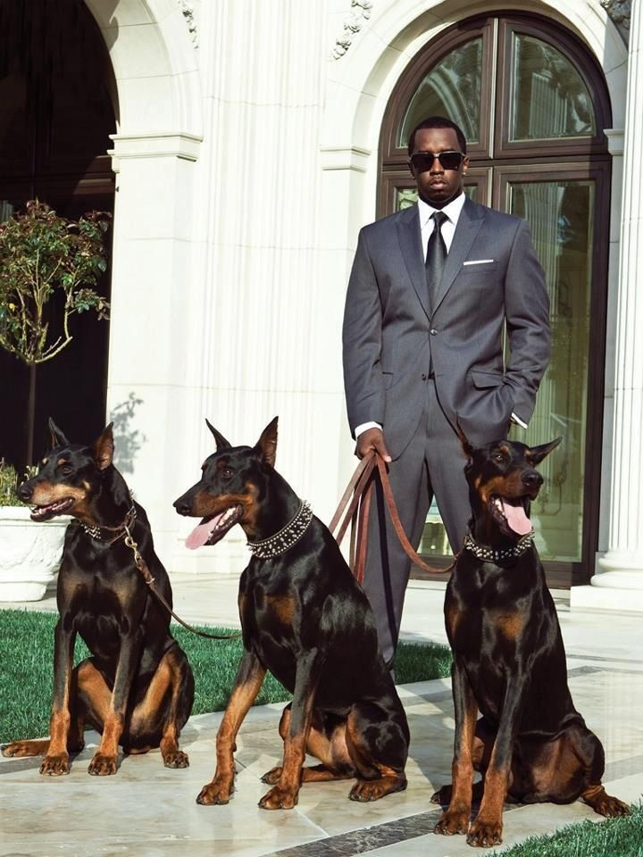 Class Doberman Doberman Pinscher Doberman Dogs