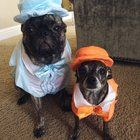 The dumbest thing Ive ever done to my dogs.