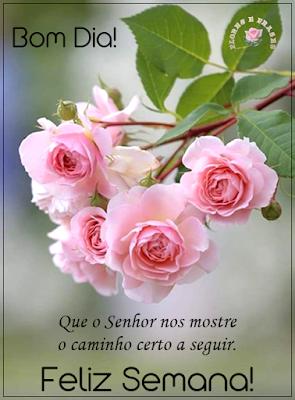 Flores E Frases Bom Dia Mensagem Pinterest Frases