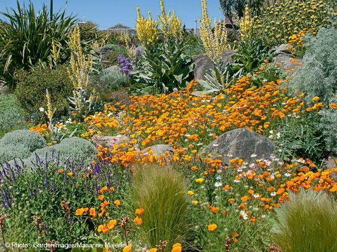 des id es de plantes pour un jardin sec jardin jardin. Black Bedroom Furniture Sets. Home Design Ideas