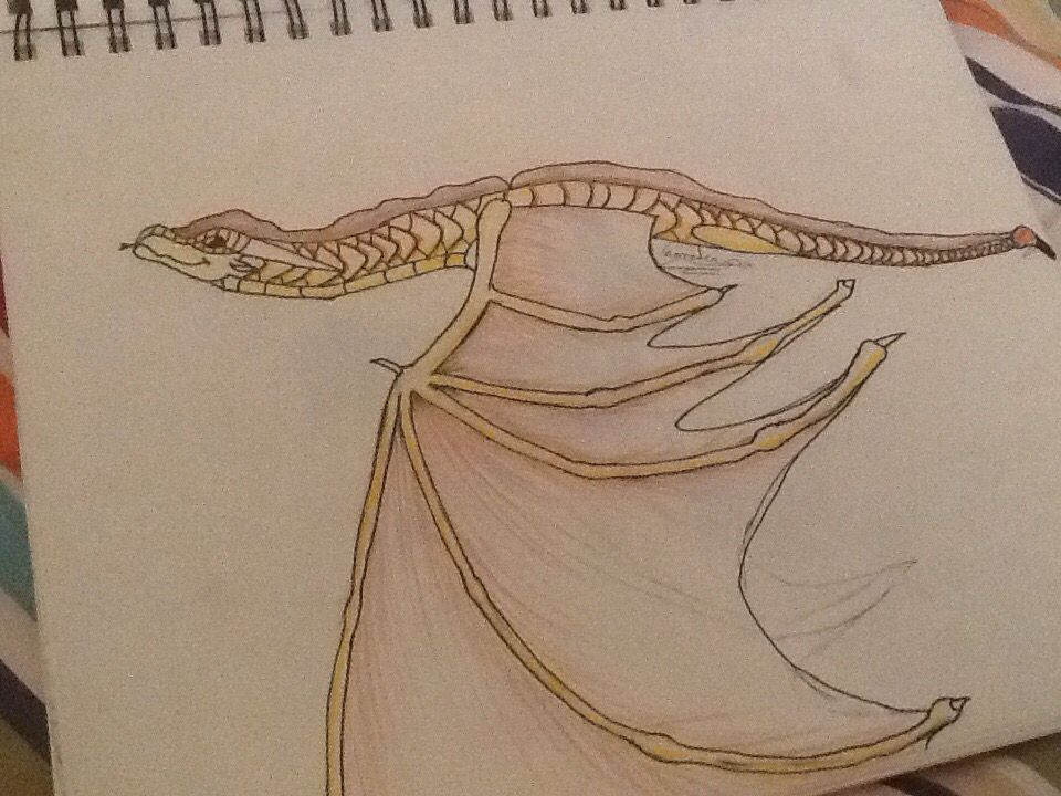 Wings of fire sandwing, no name yet, my OC